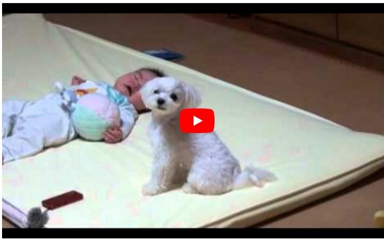 Die Mutter legt ihr hilfloses Baby neben den Hund. Was die Kamera dann filmt, macht nicht nur das Baby sprachlos.