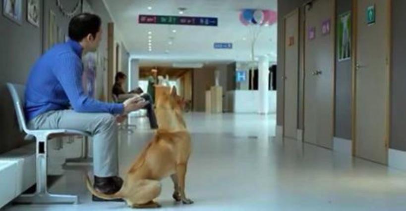 Der Besitzer wartet mit seinem Hund im Krankenhaus – aber schau, mit was die Krankenschwester herauskommt