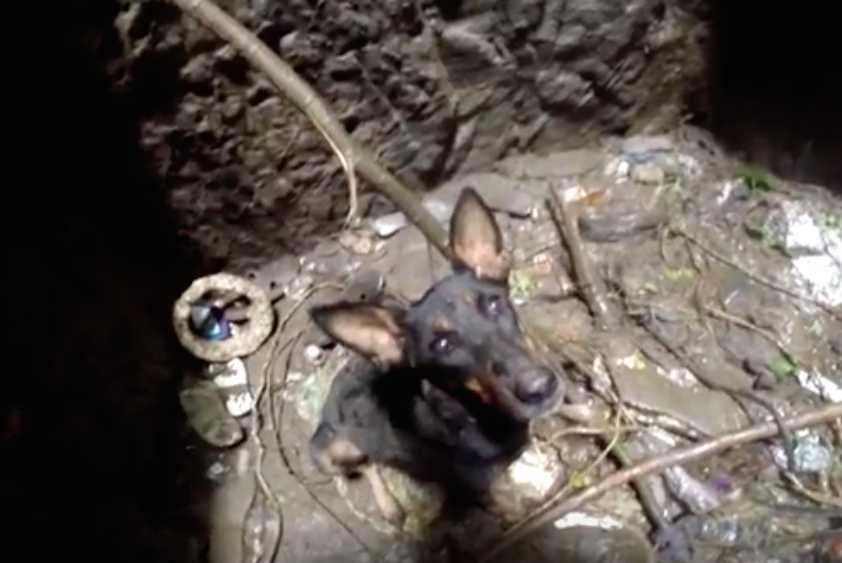 Die Hündin ist im Brunnen gefangen – schau, wie sie ihre Dankbarkeit zeigt, als sie gerettet wird
