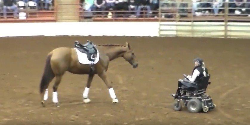Das Pferd trabt zu der Frau in dem Rollstuhl – Momente später ist das gesamte Publikum sprachlos