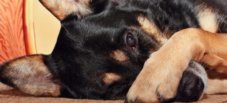 Eine herzzerreißende Geschichte: Treue Hundeseele wartet im Krankenhaus auf totes Herrchen