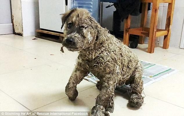 Schreckliche Szene: Kinder tauchen Hund in Leim ein