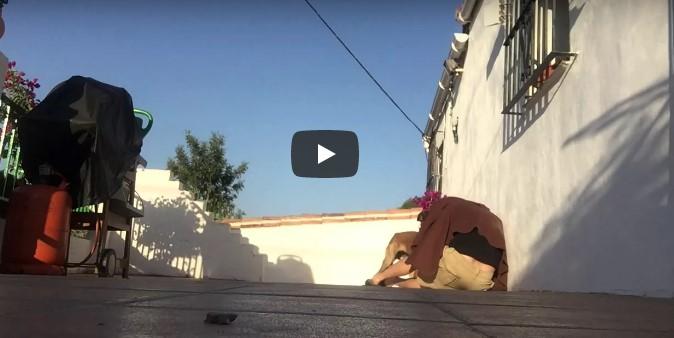 Besitzer war längere Zeit weg und möchte seinen Hund überraschen – schau dir dessen süße Reaktion an!