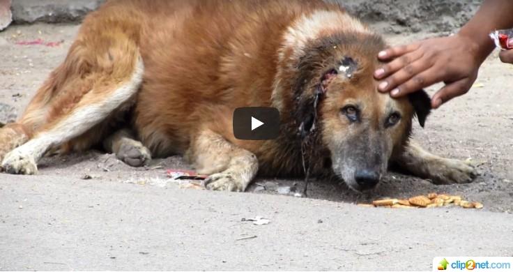 Hund Bhaloo wurde von Animal Aid gerettet!