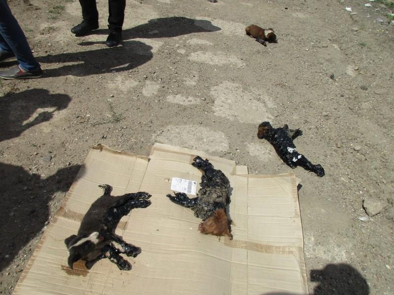In Rumänien werden diese Hunde sinnlos gequält, doch dann kommt dieser Mann und nimmt sie einfach mit.