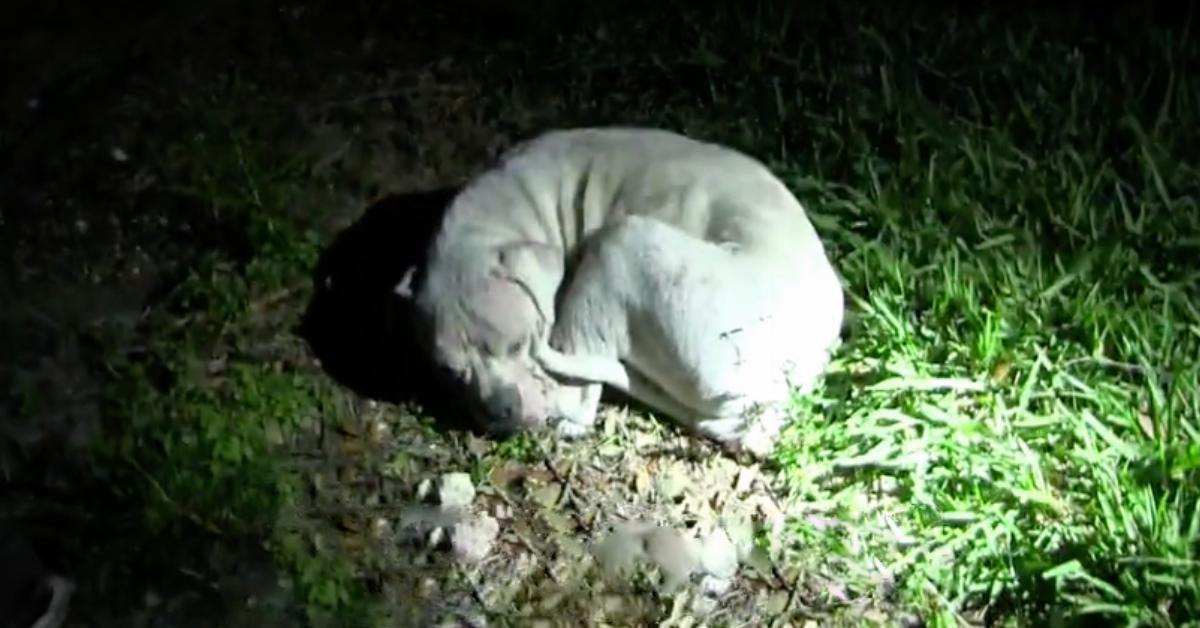 Der sterbende Hund winselt leise, als der Mann ihn vorsichtig streichelt. Als er sich aufrichtet, läuft es mir kalt den Rücken runter.