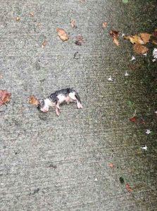 Die Familie sieht ein Kätzchen im Regen liegen – als sie es aufheben, ist es einfach berührend!