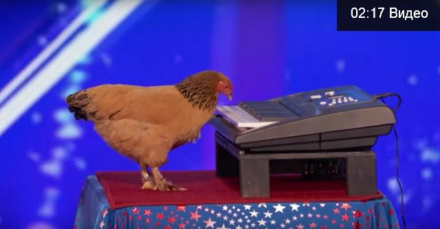 Das Huhn spielte Klavier so gut! Zuerst konnte ich an meine Augen nicht glauben!