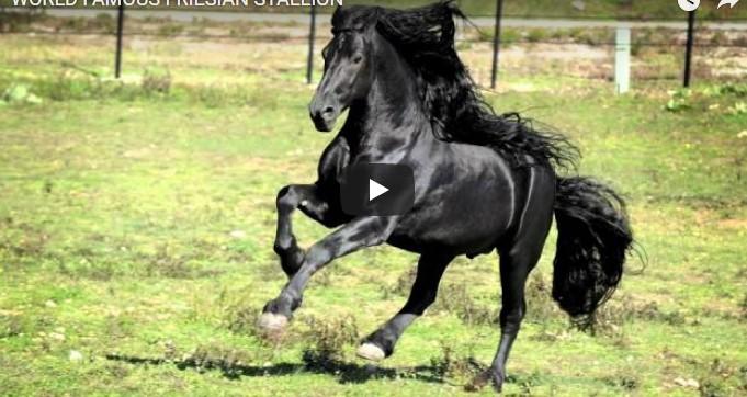 Es sieht wie ein gewöhnliches, schwarzes Pferd aus – aber warte, bis es sich dann umdreht!