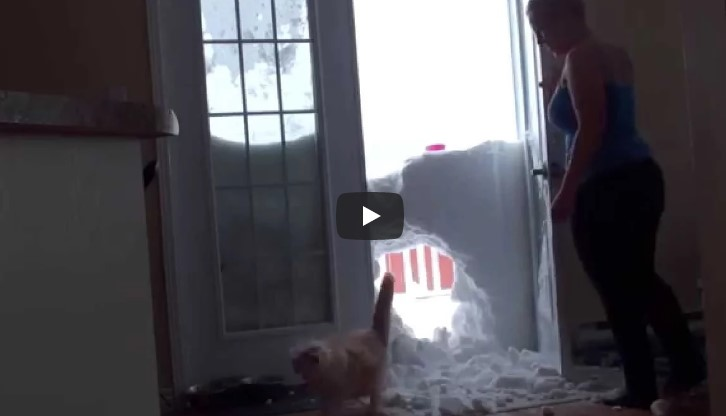 Sie ruft ihre Katze zu sich ins Haus. Deren Auftritt? Mehr als episch.