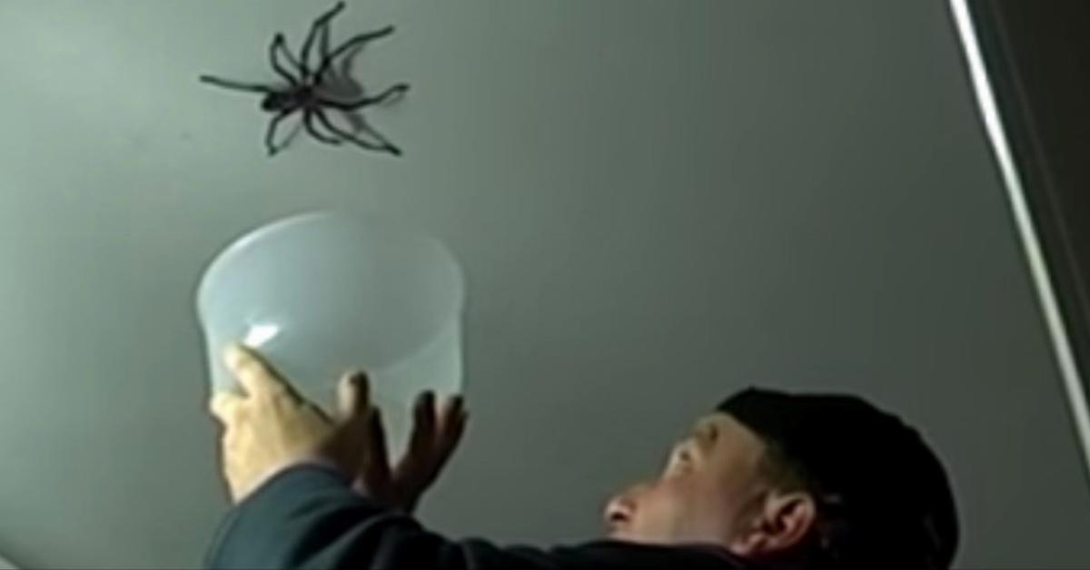 Die Tochter filmt, wie ihr Vater versucht die Riesen-Spinne an der Decke einzufangen. Doch was dann passiert, lässt mich laut kreischen!
