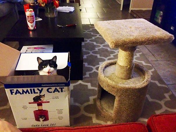 8 Bilder die beweisen, dass Katzen die stursten Geschöpfe dieser Welt sind