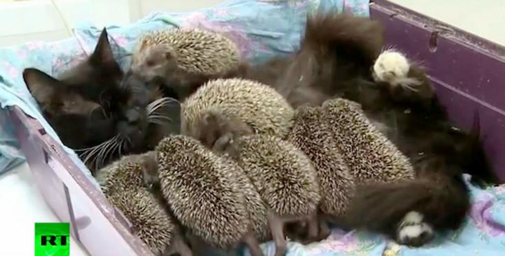 Als diese 8 Babys ihre Mutter verlieren, schreitet eine heldenhafte Katze zur Rettung ein