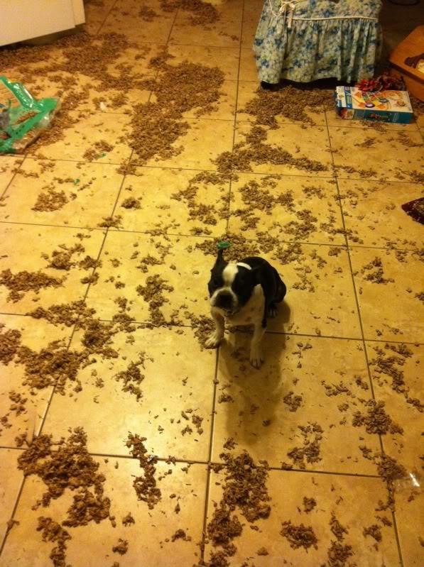 14 Haustiere von ihren Besitzern in flagranti ertappt.