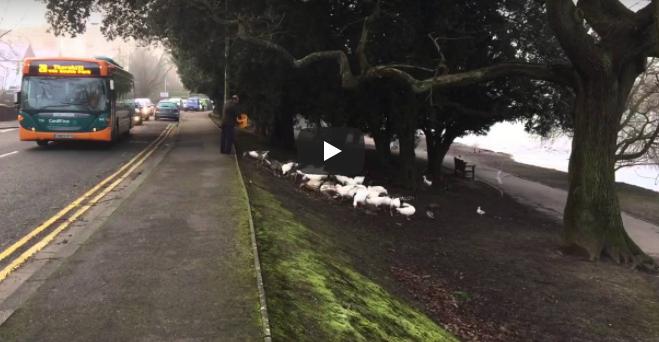Er füttert die Vögel jeden morgen um 8 Uhr – schau, was passiert, als er einmal zu spät kommt