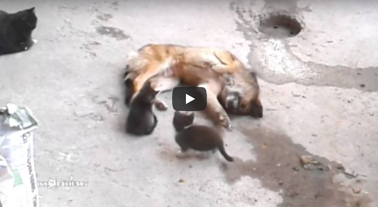 Die Katzenmama und ihre Jungen treffen auf den Hund. Doch was dann passiert, lässt alle dahinschmelzen!