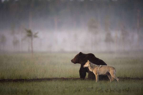 Was dieser Jäger jeden Abend beobachtet, ist kaum zu glauben. Er traut seinen Augen kaum – dann ruft er sofort einen Fotografen!