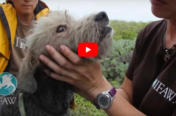 Der Tierarzt wäscht diesem Hund das Öl aus dem Fell. Als sie ihn zeigen, kommen mir die Tränen.