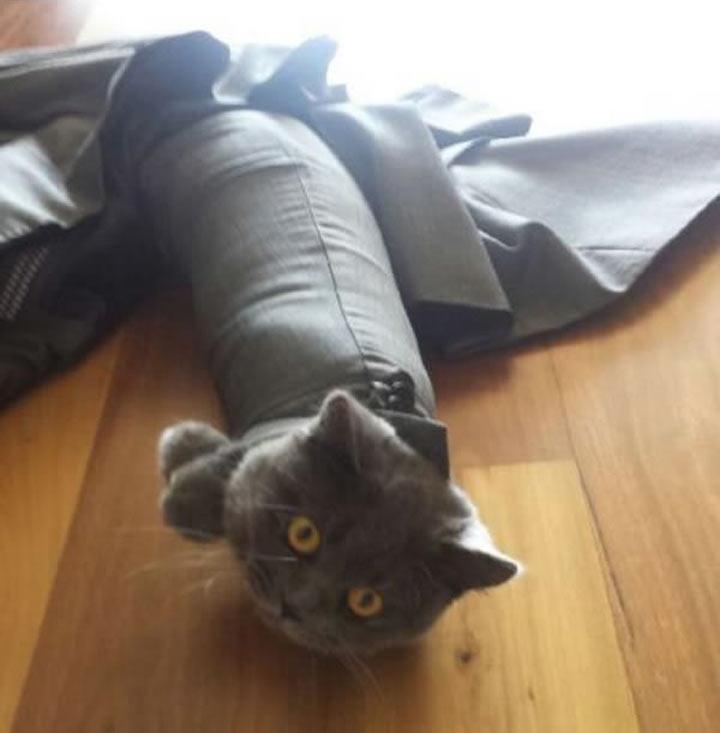 Katzen, die keine richtigen Entscheidungen getroffen haben