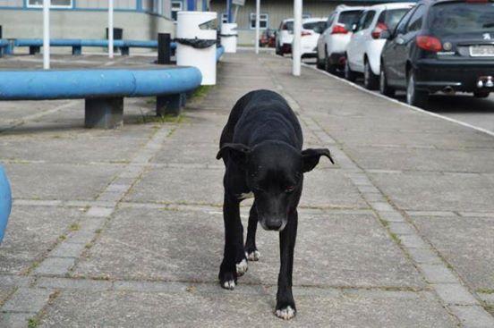 Der Hund wartet vor dem Krankenhaus auf seinen toten Besitzer. 8 Monate später fehlt von ihm jede Spur.