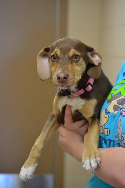 Hund führt Besitzer zu weggeworfenem, nacktem Mädchen.