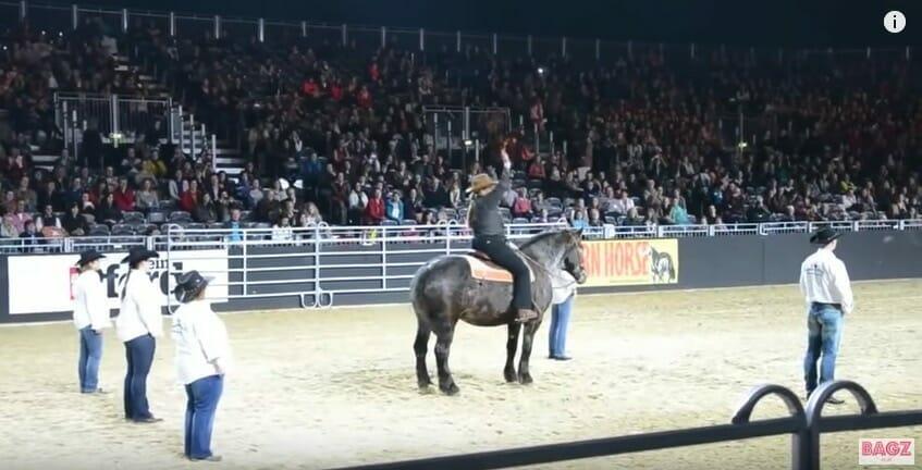 Pferd hört seinen Lieblingslied: Sekunden später reibt sich die Zuschauermenge die Augen