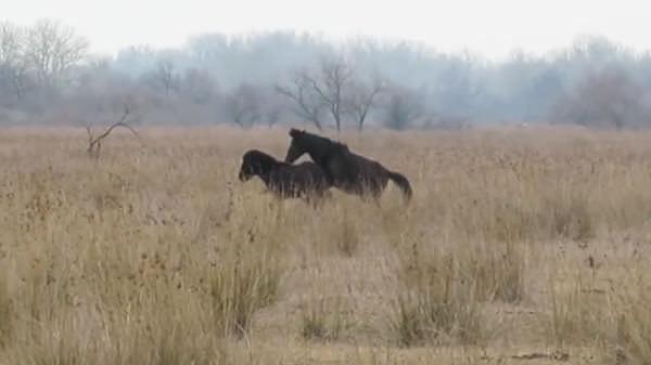 Tierfreund befreit ein Pferd von seinen Ketten – sehen Sie, wie das Tier ihm dankt