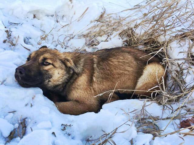 Fahrer überfährt Hund und lässt ihn 12 Stunden lang zum Sterben im Schnee zurück