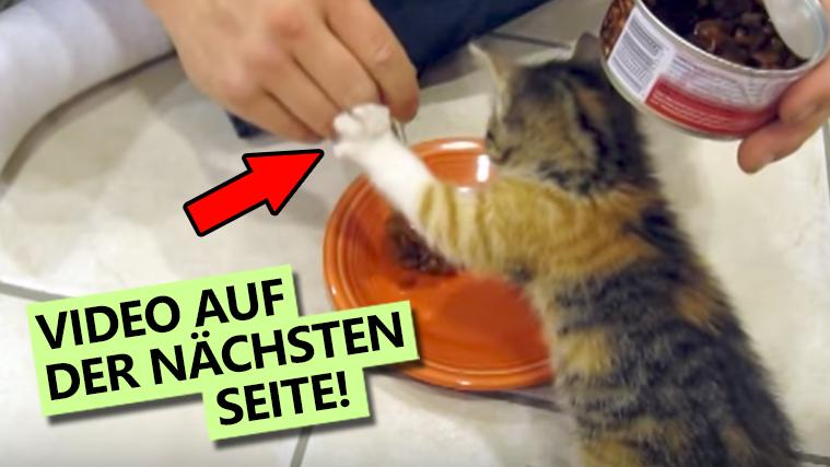 """""""Finger weg!"""" – Dieses kleine Kätzchen versteht keinen Spaß, wenn es um ihr Essen geht!"""