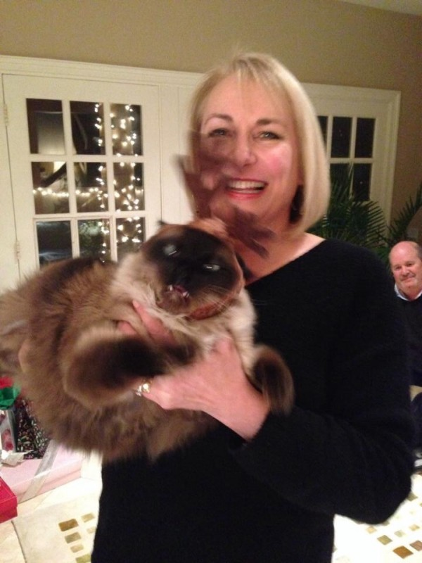 Zwanzig Katzenselfies die nicht ganz im Sinne der Besitzer gelungen sind.
