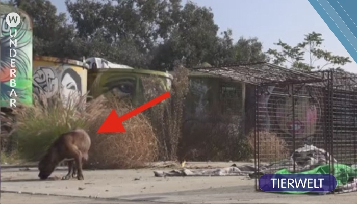 Dieser Mann folgt einem Hund zu einem Versteck. Doch was da auf dem Boden liegt, glaubst du nicht.