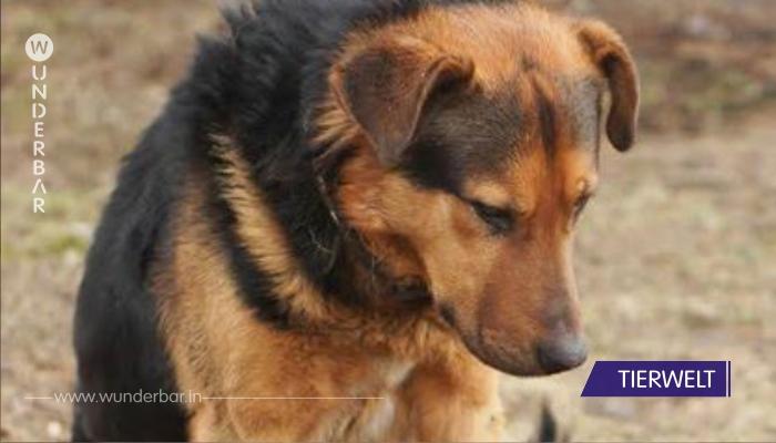 Ausgesetzt wartet Hund vergeblich eine Woche lang auf Rückkehr des Besitzers!
