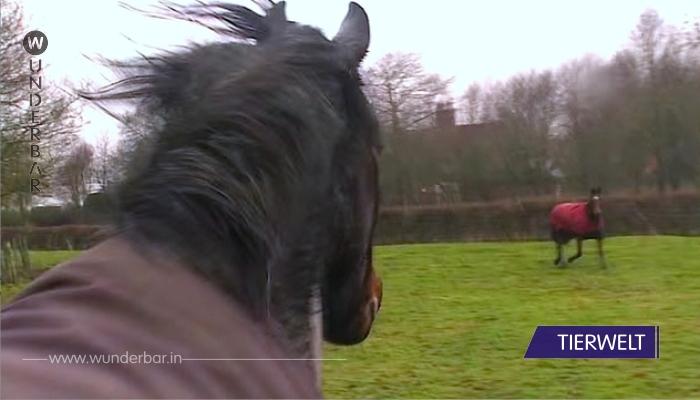 Dieses Pferd wird wiedervereint mit einem alten Freund. Achte auf das rote Pferd. Mir kommen die Tränen!