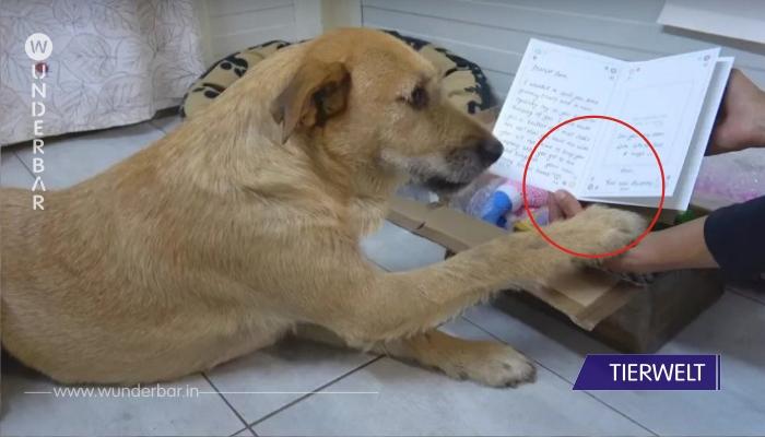 Hund erhält süßes Paket von Adoptivfamilie!