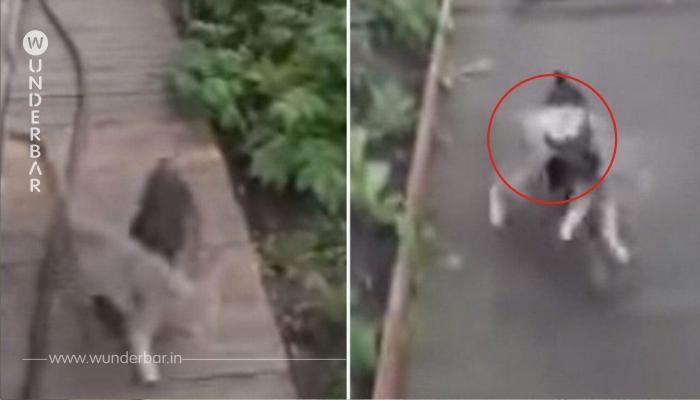 Besitzer fragt seinen Chihuaha, ob er die Katze ins Haus bringen kann – seine Reaktion ist Gold wert!