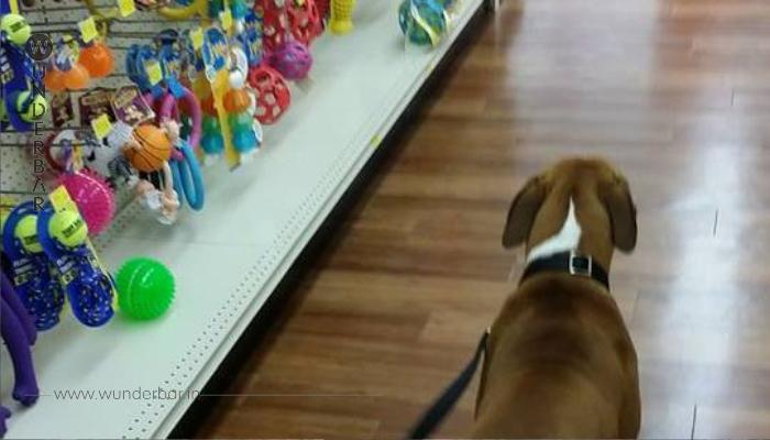 Misshandelter Hund bekommt sein erstes Spielzeug!