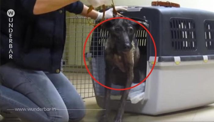 Die Frau wollte dem Hund einen ehrenvollen Tod gewähren – doch dieser hatte andere Pläne!