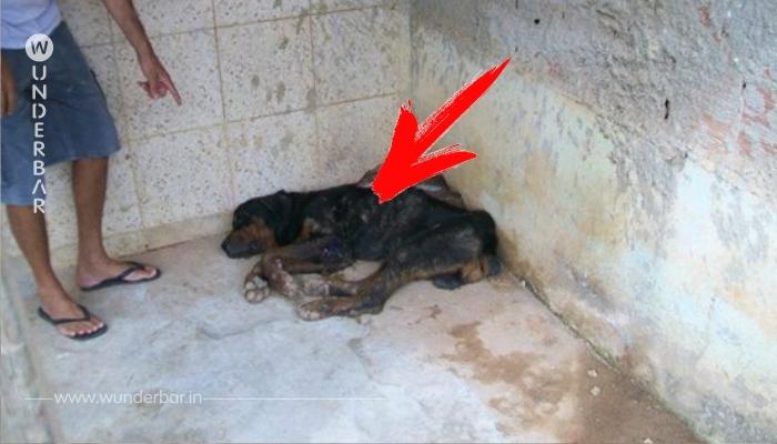 Der Hund wurde so entsetzlich misshandelt, dass er allen Menschen misstraut. Als der Mann ihm helfen will, ist es fast schon zu spät.
