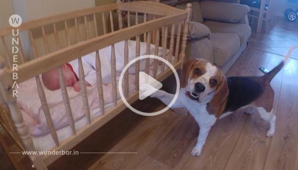 Das Baby weint – aber selbst die Mutter ist überrascht, auf welche Lösung der Familienhund kommt!