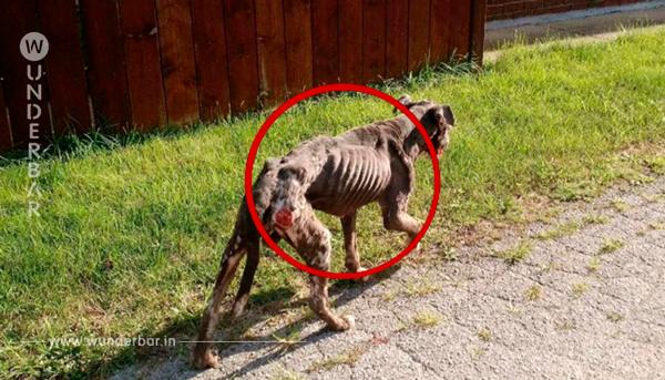 Als die Spaziergänger den verhungerten Hund näher ansehen, überkommt sie kaltes Grauen. Jemand hat ihn schrecklich gequält.