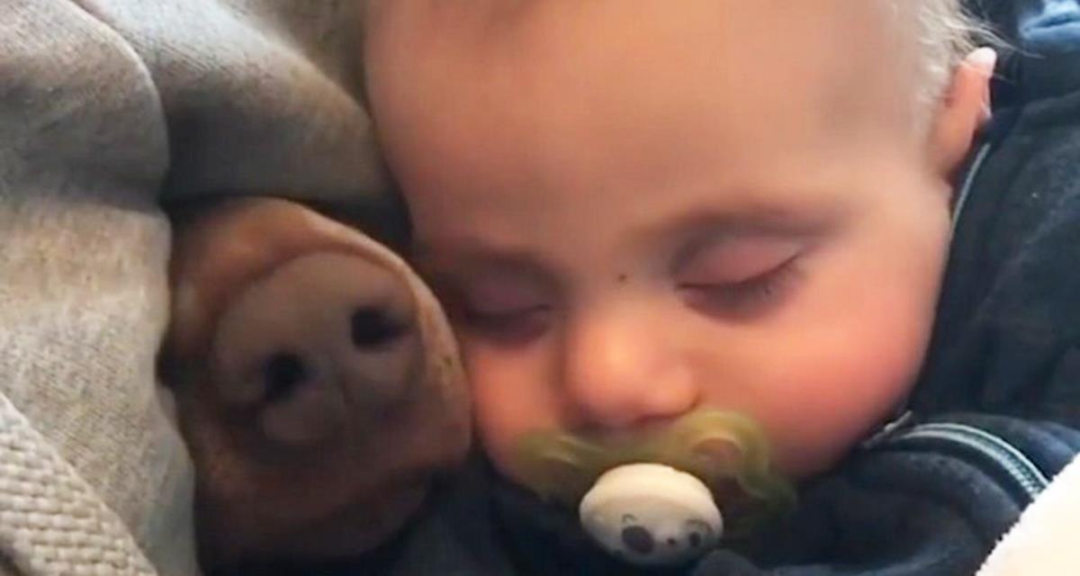 Die wahre Geschichte zwischen den Babys und den Tieren