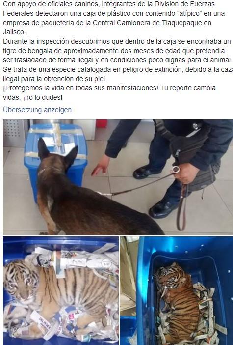 Polizeihund findet ein vom Aussterben bedrohtes Tier – in einer Box, welche mit der Post gesendet wurde