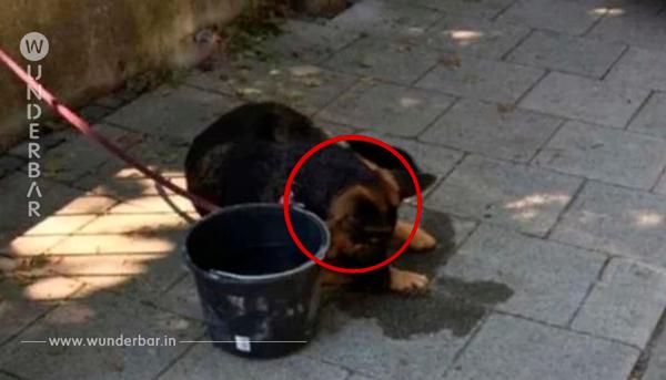 Die Besitzer sperren ihren armen Hund im heißen Auto ein, aber die Passanten retten ihn
