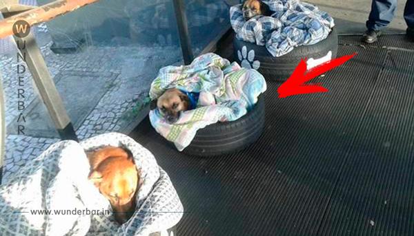 Drei Streuner schliefen jede Nacht im Bus – nun taten die Mitarbeiter etwas Herzergreifendes