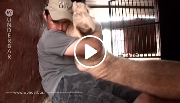 Eine Löwin bekommt einen Babylöwen und dann kommt der Pfleger zu Besuch.. Wie die Löwin hierauf reagiert, hatte ich nicht erwartet!