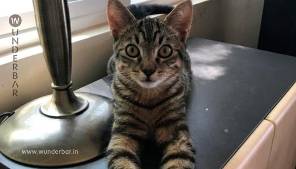 Mann kommt nach Hause und adoptiert eine Katze!