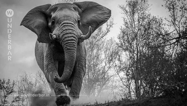 Kaum jemand hat Mitleid mit dem von einem Elefantenbullen zerquetschten Mann.