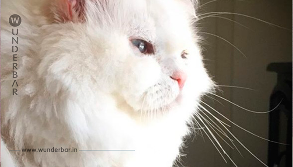 Sie nehmen die streunende Katze bei sich auf. Doch niemand ahnte, was einige Wochen später aus ihr werden sollte.