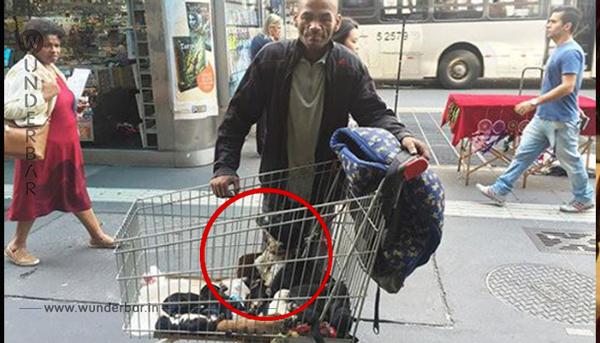 Was der obdachlose Mann für die Welpen seiner Hündin macht, verdient Applaus.