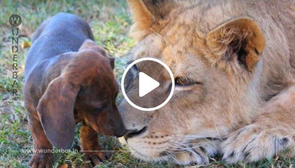 Der Hund schleicht sich an die Hunde heran – aber seine unerwartete Reaktion wurde nun zum Internethit!